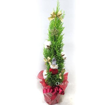 <フジテレビフラワーネット> クリスマスツリー PL570画像