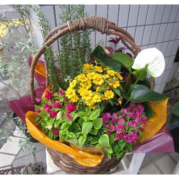 <フジテレビフラワーネット> 季節のお花の寄せバスケット?画像