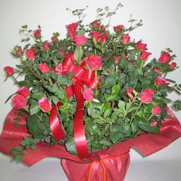 豪華な赤バラのアレンジメント