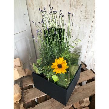 <フジテレビフラワーネット> 観葉植物と花の寄せ鉢画像