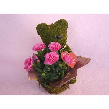 <フジテレビフラワーネット> Plant Moss Bear Pink画像