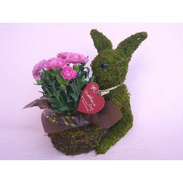 <フジテレビフラワーネット> Plant Moss Rabbit Pink画像