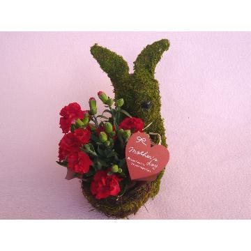 <フジテレビフラワーネット> Plant Moss Rabbit Red画像