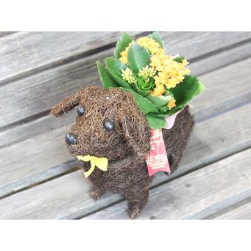 <フジテレビフラワーネット> Dog plants YO画像