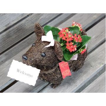 <フジテレビフラワーネット> Dog?ガール 「メッセージ」 plants RP画像