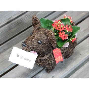 <フジテレビフラワーネット> Dog? 「メッセージ」 plants RP画像