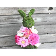特別価格Moss Rabbit プラス PR