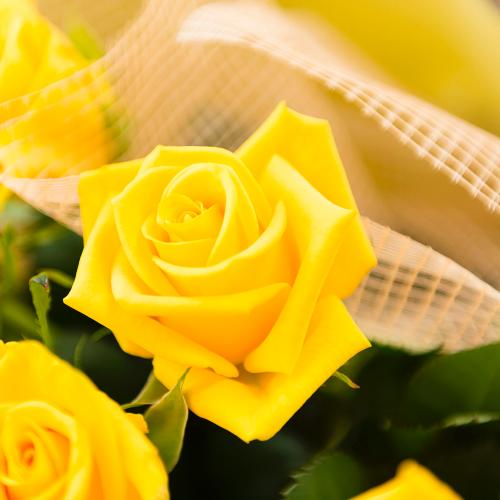黄色いバラの花束 フラワーギフトはプロのお花屋さんにおまかせ フジテレビフラワーネット