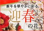 新年を華やかに彩る 迎春の花