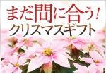 まだ間に合う!2014 Winter Flower Giftクリスマスギフト